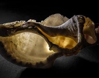 Broken Sea Shell, canvas, photography