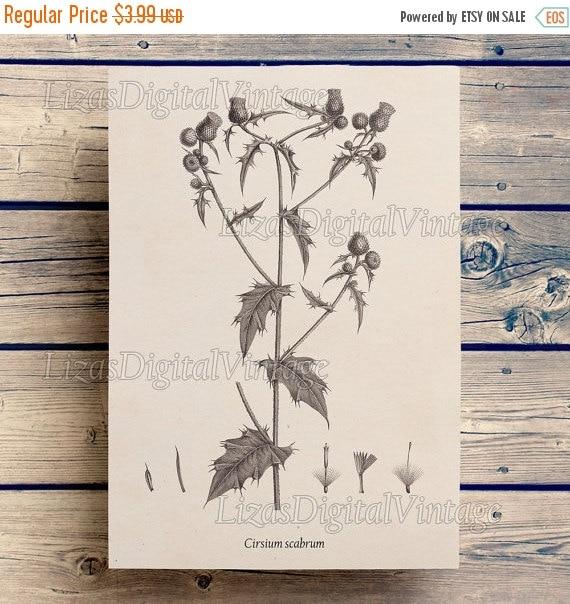 50% OFF Art print, Thistle print, Printable art, Antique botanical print, Illustration, Digital vintage prints, Wall art vintage, Download,