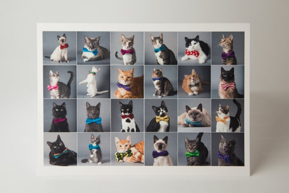 Cats in Bowties cards - Greeting cards, note cards - 5 Pack