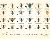 Native Bees of NSW Poster  (2nd edition)