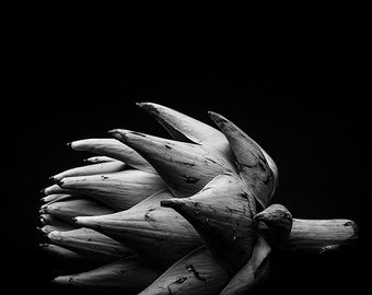 Abstract Fine Art Photographic Print of an Artichoke in black and white can be printed on paper or metal or canvas or acrylic