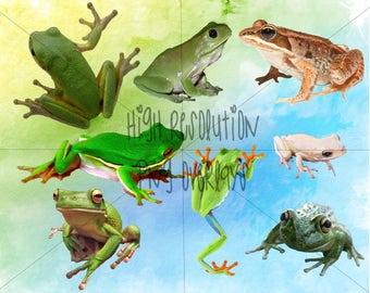 frog overlay transparent background for shopshop