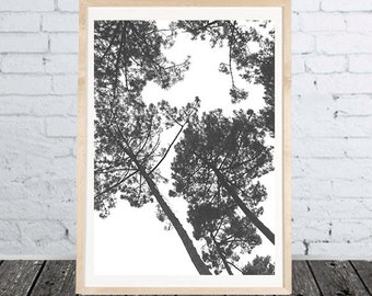 Black white trees poster Print Photo- different sizes - download files for printing