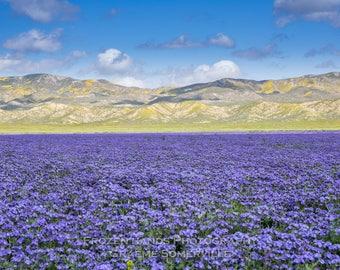 Lake Violet - California Superbloom 2017