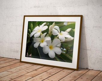 Flower frangipani photography digital download, printable art, digital photography Digital art photography, flower download