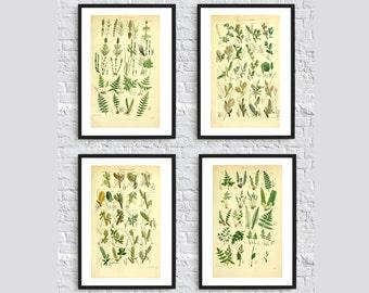 British flora wall art decor botanical illustration print poster SET OF 4 gallery trees leaves needles wild nature kitchen home decor fern