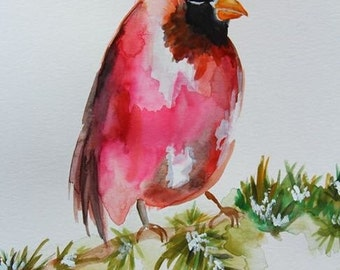 Cardinal water color. Red bird on snowy branch. Holiday cardinal. Water colored red bird framed painting