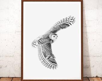 Owl Photography, Woodlands Nursery Animal, Owl Printable, Owl Download, Owl Wall Art, Bird Print, Digital Print, Owl Decor, Nursery Art