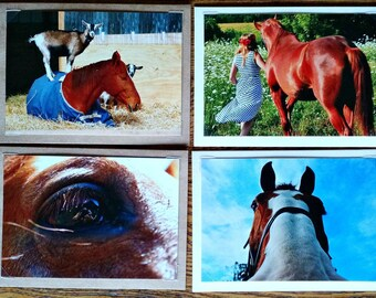Horse Note Card Set Of Eight Horse Photo Cards Horse Goat Farm Girl Farm Cards Gift For Horse Lover Teacher Coach Kids Hostess Horse Card
