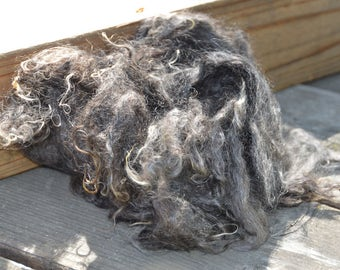 Long and Ultra-Fine First-cut Kid Mohair Fiber from Sophie the Silver Angora Goat