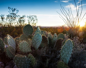Prickly Pear Cactus: WALL ART Fine Art Photography Southwestern Desert Landscape Sunset Natural Light Outdoors Bright Color Rustic Decor