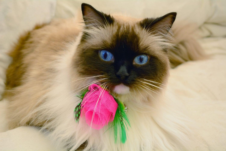 Pink rose cat collar