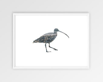 A4, Curlew, Wall art, Decoration, Home decor, Print, Mural Art, double exposure, bird