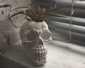 Plaster Skull Planter- Large
