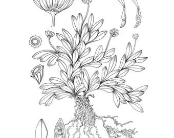 The complete Botanical Colouring book.