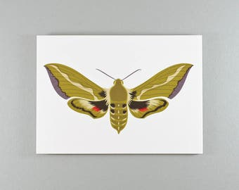 Note Card | Olive Green | Bedstraw Hawk-Moth | Single card and envelope