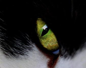 Cody's eye - Cat - Photography - Art - Photo - Cat Photo - Green - Kitten photo - Animal photography - Nature photo - Cute