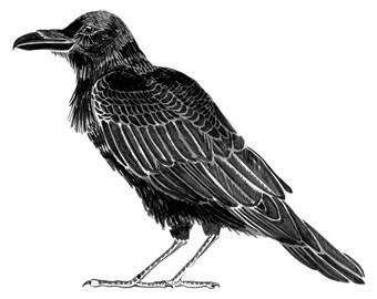 """Giclée Art Print - Raven - 8.5 x 11"""""""