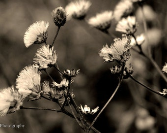 Flower Nature Photography | Sepia Print | # 3 of 5
