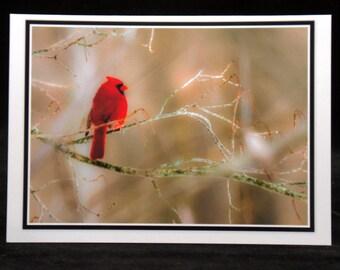 A 5x7 Blank Cardinal Card By ThomasMinutoloPhotos