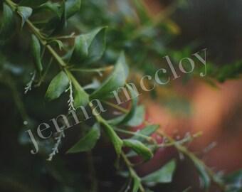 Blurred Plant Photo // Digital Download