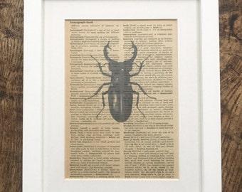 Vintage Printed Book Pages Stag Beetle Print on Book Pages Vintage Book Prints
