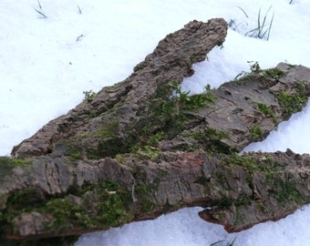Tree bark covered with moss, home decor, home decor, rustic decor