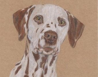 "Drawing Dalmatian original colored pencil no print animal pictures dog 7,8 x 7,8"" / ArtbySandraZereike"