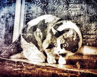 Cat art print, urban art, artwork, mural, illustration, animal art, cat lover gift, gift idea, photo print