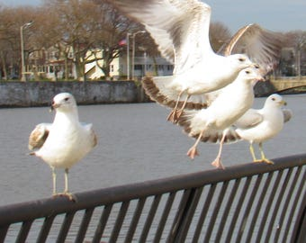 Take off Seagulls