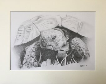 Toady - Tortoise commission