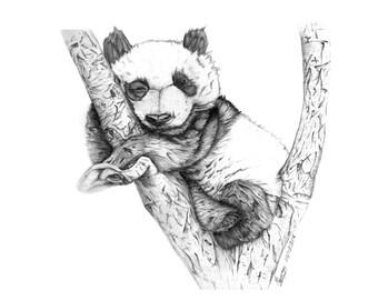 George the Panda