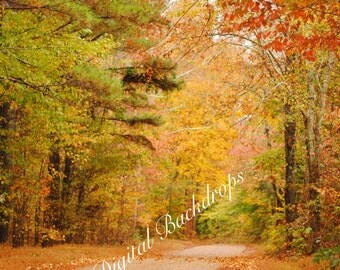 Fall Foliage Digital Background
