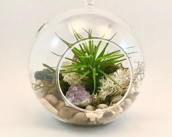 "6"" Airplant Terrarium Kit"