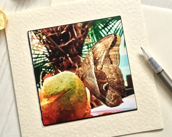 Butterfly card, brown butterfly, any occasion, greetings card, blank inside, wildlife card, nature card, photo card, original card (AO3)