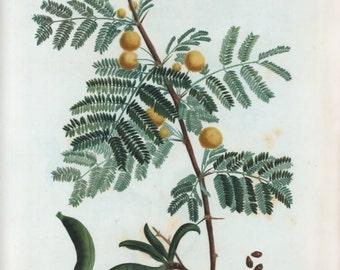 Vintage Citrus Botanical Download for Print
