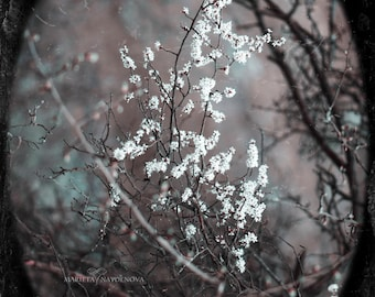 Vintage Blooming Branches Photography Print, Blooming Tree Home Decor, Nature Photography Wall Art