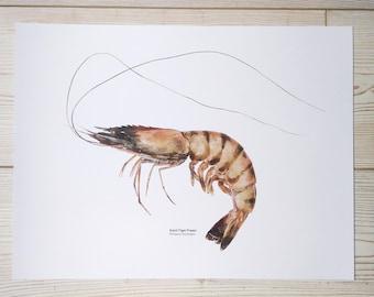 16x12 inch Digital Prawn print, Prawn illustration, Coastal print