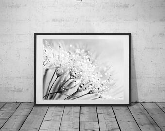 Flower Photography, Dandelion, Wall Art Print, Black-White Photo, Printable Poster, Digital Download, 4 JPG's