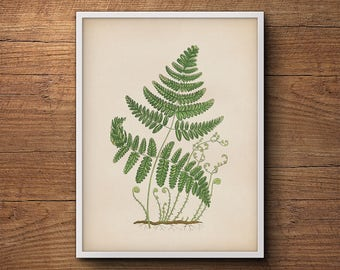 Fern wall print, Fern leaf print, Botanical print of ferns, Vintage botanical illustration, Botanical illustration, Kitchen decor, Wall art