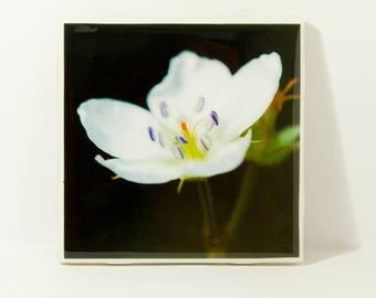 Wildflower Ceramic Tile Coasters
