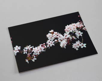 Pink and white blossom A6 postcard (matte)