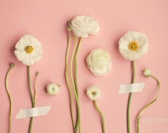 Fine Art Photo, Ranunculus Print, Flower Photograph, Salmon, White, Mixed Media Art, Flower Art, Home Decor, Botanical, Floral, Still Life