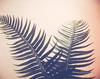 Botanical photography print tropical green fern plant leaves large wall art - Peachy Fern