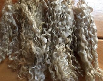 Teeswater long locks Wool for spinning, lightly rinced spinning fiber, roving 1 oz