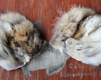Coyote ears headdress - real eco-friendly clip-on coyote fur ears costume for totemic ritual and dance