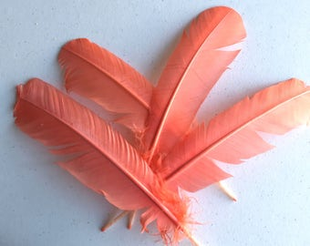 TURKEY QUILL,  Flamingo Pink , 4 pieces / Q-24