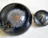 Vintage Lucite Dandelion Puff and Seedlings Paperweight Set -Dome Shaped Paperweight - Desk Accessory - Seed Gazer Cool Acrylic Art