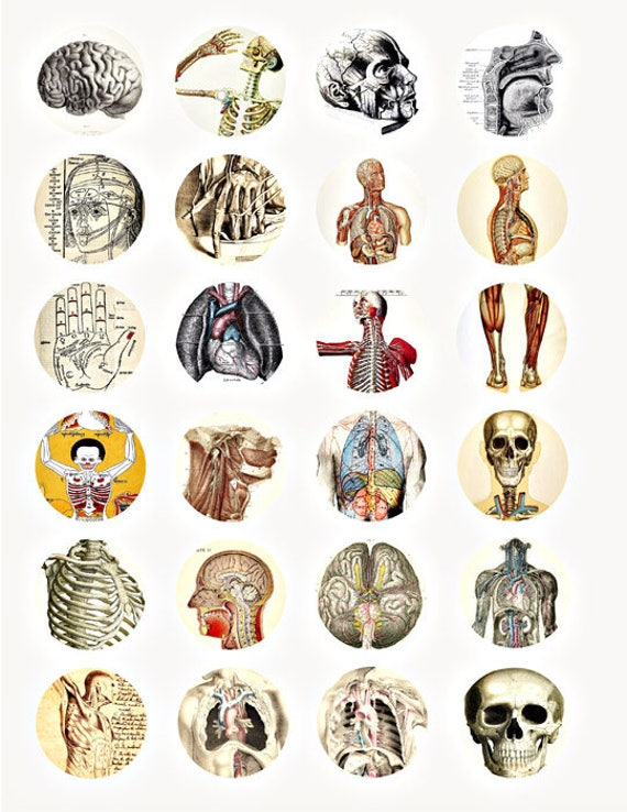 human anatomy medical science collage sheet 1.5 inch circles clip art digital download images printable graphics brain ribs craft papers
