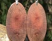 Amazing Very Big Super Macadamia Wood Lightweight Earrings